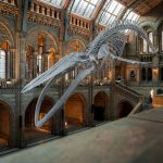 5 Free Museums to See in London